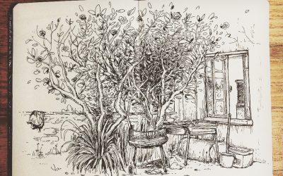 Arbre du jardin